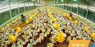 Điều kiện, thủ tục cần thiết khi vay vốn chăn nuôi Agribank