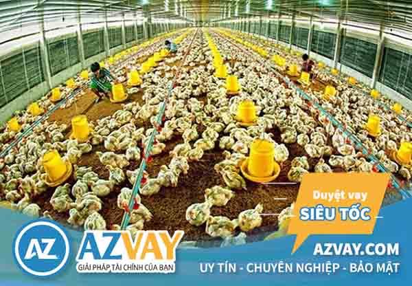 Vay vốn chăn nuôi là hình thức vay tiền để phục vụ nhu cầu sản xuất nông nghiệp